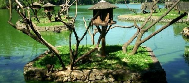 Estágio no zoológico de São Paulo