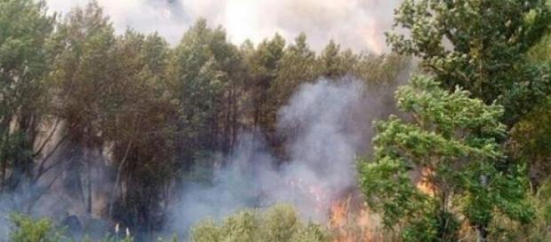 Fuego arrasando un bosque en el Norte del país