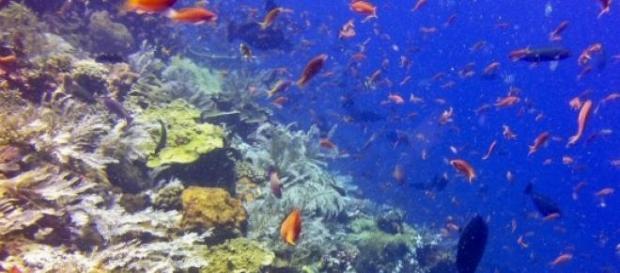 Riffleben der Komodo-Inseln