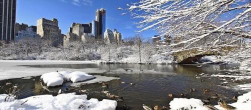 Parc de Manhattan, New-York.
