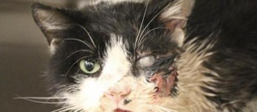 O gato reagiu bem aos procedimentos cirúrgicos