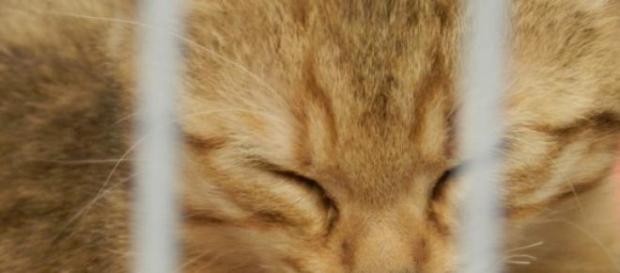 Trois tonnes de chats ont été saisies au Vietnam.