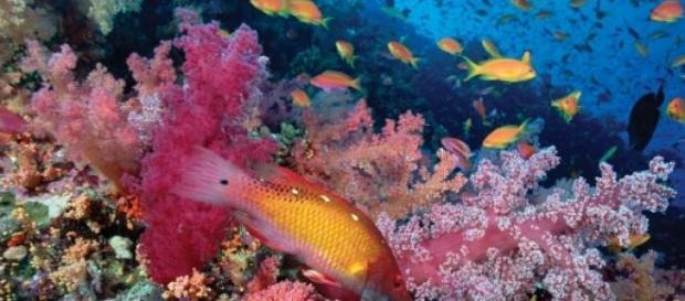 Restam apenas 74% de recifes de coral no Mundo.