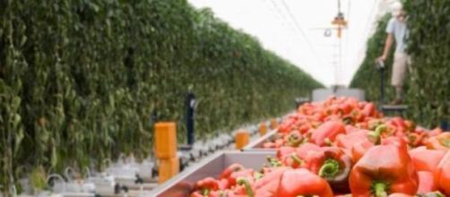 Alimentos europeus cada vez mais seguros