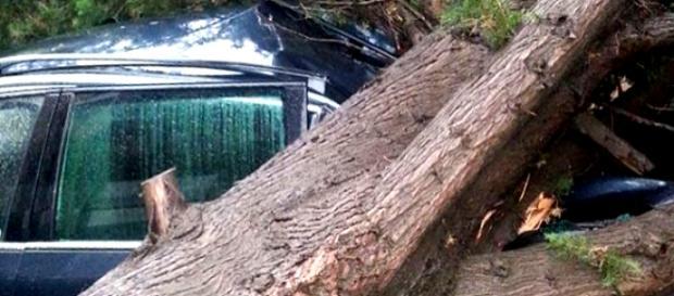 Caltanissetta, albero abbattutosi su un'auto
