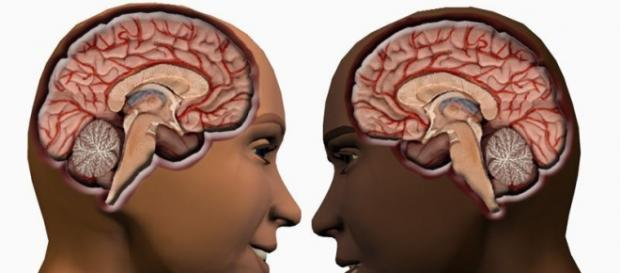 How Male Brain Is Different From Female Brain