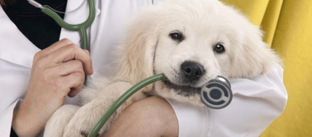 In arrivo il Pronto soccorso per animali