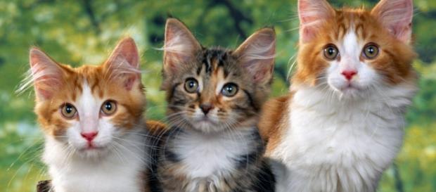 Pisica afecteză starea de sănătate a omului