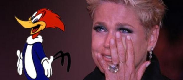 Xuxa perdoa pica-pau depois de anos