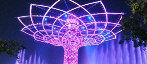 L'albero della vita, immagine notturna