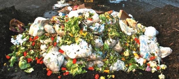 Comida desperdiciada en la basura