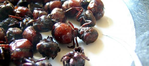 Plato de hormigas culonas, Parlamento Europeo