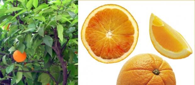 Las naranjas son una fuente de Vitamina C