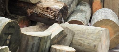 Power plants have turned wood into a detriment.