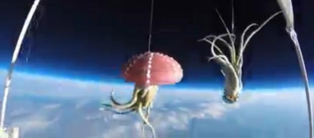 Captura de pantalla del vídeo de DesignCurial.com