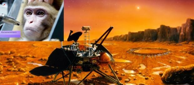 În 2017 o maimuţă va fi trimisă pe Marte de Rusia