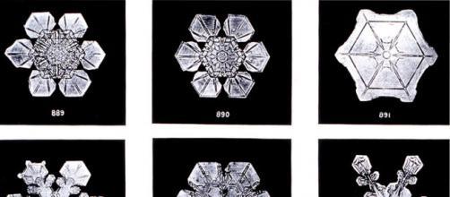 foto di Wilson Bentley: cristalli di ghiaccio