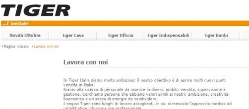 Offerta di lavoro con Tiger: come inviare il cv