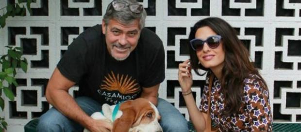 A mais nova mascote dos Clooney (Foto Reprodução)