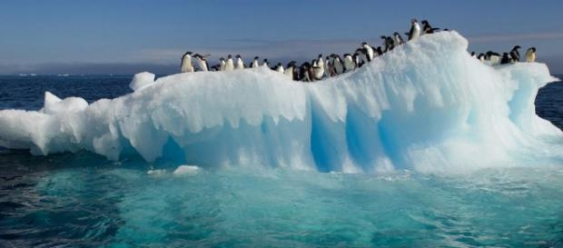 Penguins threatened with extinction