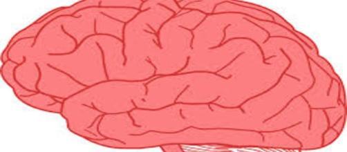 O cérebro é o mais complexo órgão dos seres