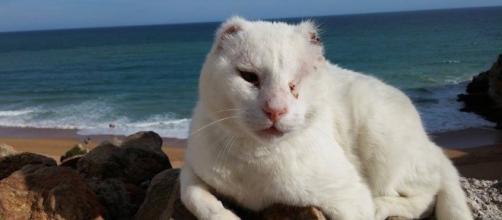 """O gato chama-se """"Sr. sem Orelhas"""" ou """"Mr no Ears""""."""