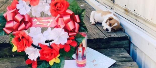 Este é o cão que terá motivado o incidente.