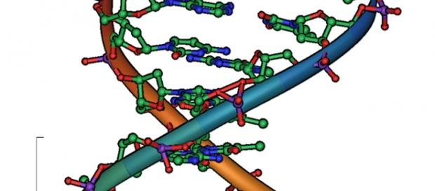 Representación del ácido desoxirribonucleico, ADN