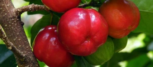 The acerola is good to have a lot of vitamin C