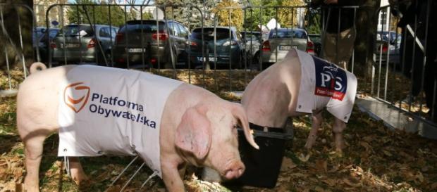 Świnie przed sejmem - happening partii KORWiN