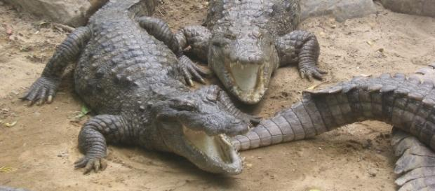 Insula crocodililor pentru paza deţinuţilor