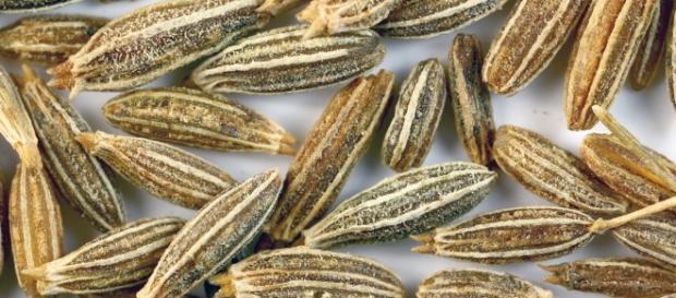 Na foto pode-se observar sementes de Cominho.