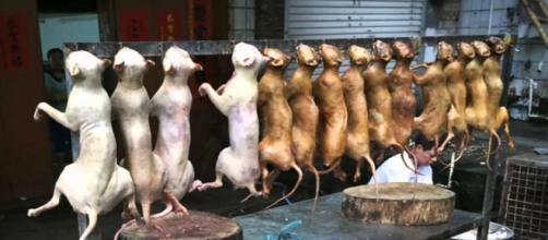 Venta de carne de perro en Corea