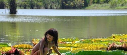 Flora Amazônica corre risco de extinção.