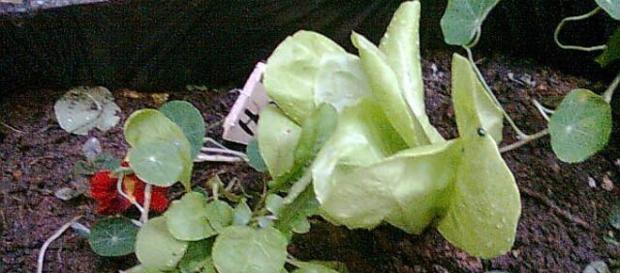 É possível fazer horta até em caixote de madeira