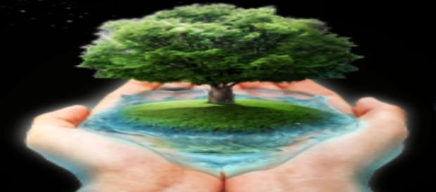 Especialização Gratuita em Ecologia