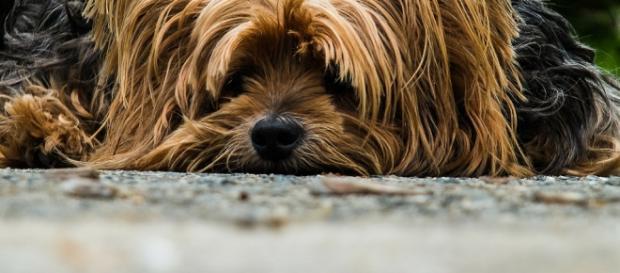 Lute contra o abandono dos animais