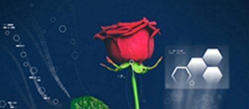 """Científicos suecos desarrollan rosa """"electrónica"""""""
