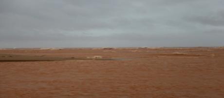 Desastre ambiental(Foto/Reprodução)