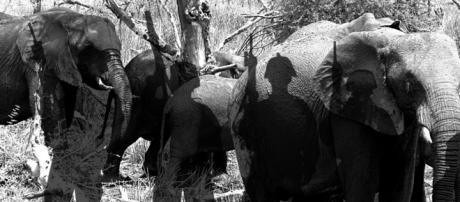 Wildlife crime stresses rangers