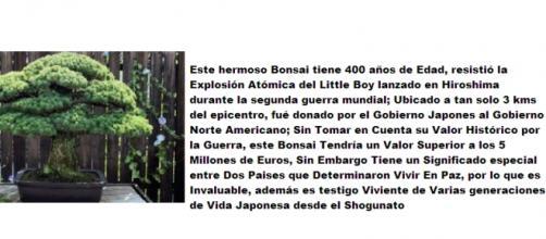 bonsái resistió la explosión atómica de hiroshima