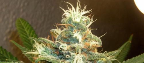 Continua la discussione sulle legalizzazione.