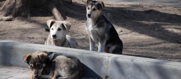 Existem muitos cães abandonados na Rússia