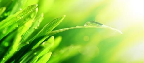 Productos naturales para aliviar el estrés