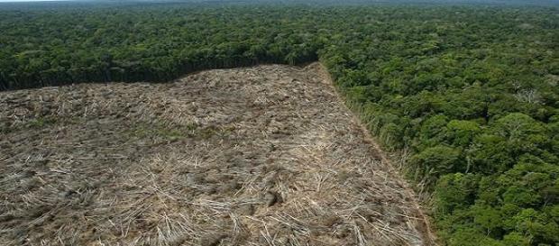 Desmatamento teve crescimento de 16% no geral.