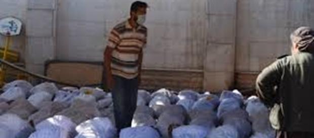sobe ainda mais o numero de morte na Síria