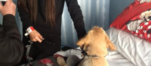 Emily, il cucciolo di Labrador 'specilae'.