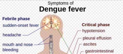 """Dengue"" by M.Häggström - public domain; Wikipedia"