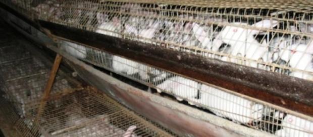Una foto degli allevamenti di conigli