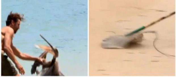 Ein Teilnehmer soll hier einen Pelikan provozieren